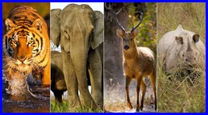 Wildlife-and-its-Conservation-in-India
